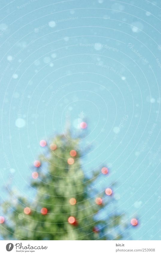 Christmas rush Environment Sky Winter Climate Ice Frost Snow Snowfall tree To fall Glittering chill Blue green Red Christmas tree Glitter Ball Snowflake