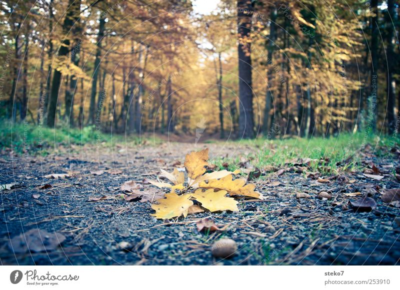discarded Autumn Leaf Forest Lanes & trails Brown Yellow Transience Change Oak leaf Acorn Footpath Discarded Ground Colour photo Exterior shot Deserted