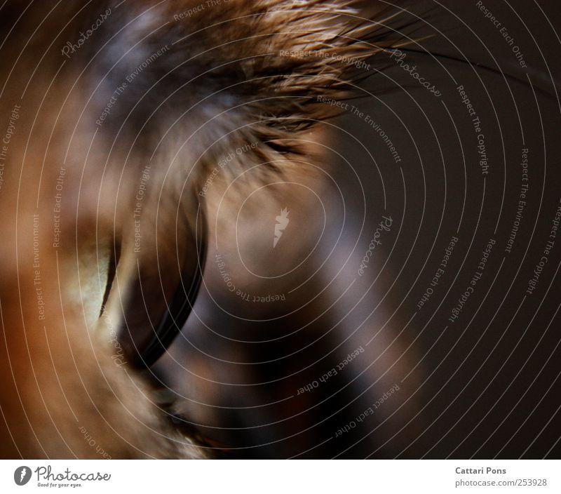 Cat Animal Eyes Observe Near Animal face Pet Macro (Extreme close-up) Iris Close-up Cat eyes Corneal layer