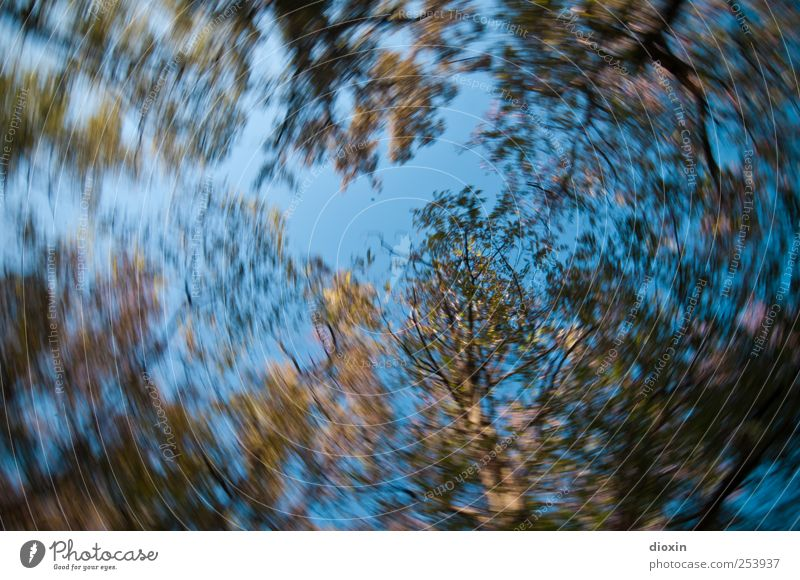 carousel perspective Sky Cloudless sky Tree Leaf Wild plant Park Forest Rotate Growth Nature Rotation Rotational speed Carousel Colour photo Exterior shot