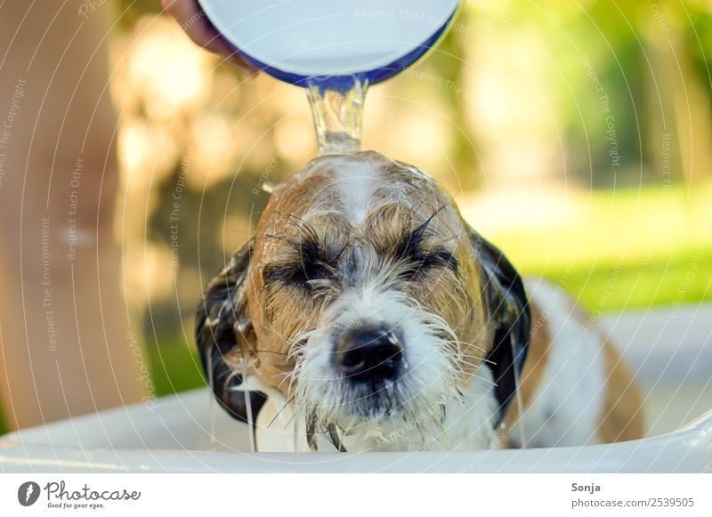 Dog, pet, animal, Personal hygiene Wellness Well-being Contentment Relaxation Summer Sun Warmth Bushes Animal Pet Animal face 1 Bowl Water Swimming & Bathing