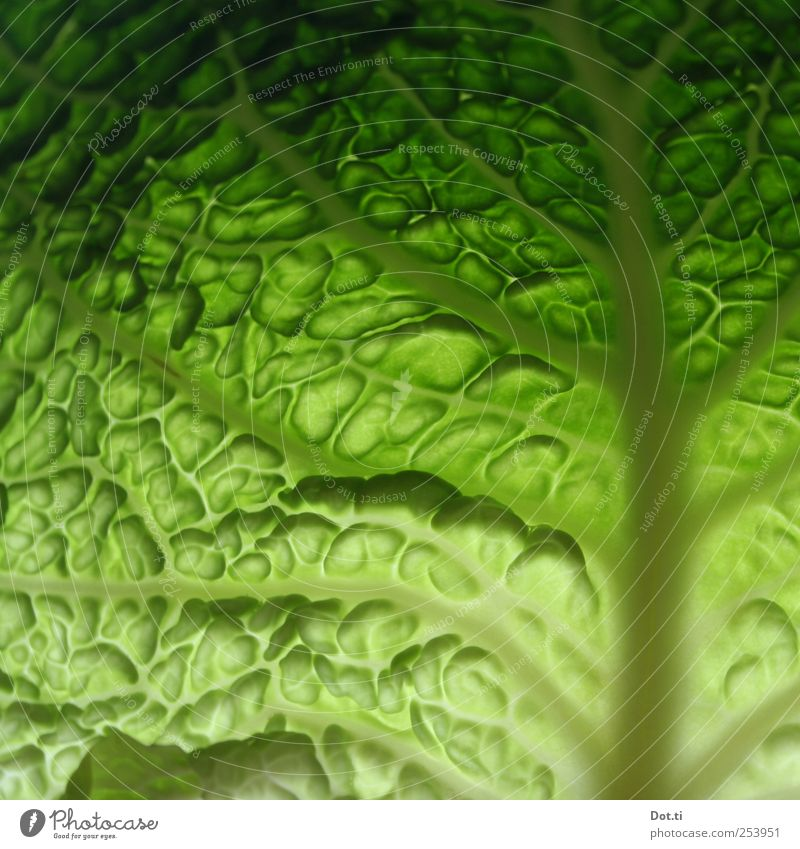 a leaf for Eva Food Vegetable Plant Green Fresh Crunchy Raw Savoy cabbage Cabbage Leaf leaf trispe pores Undulating Vegetarian diet Colour photo Close-up Detail