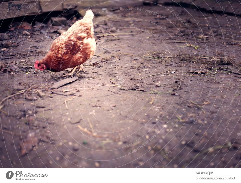 Loneliness Animal Esthetic Search Ground Farm Metal coil Egg Ecological Barn fowl Livestock breeding Foraging Free-range rearing