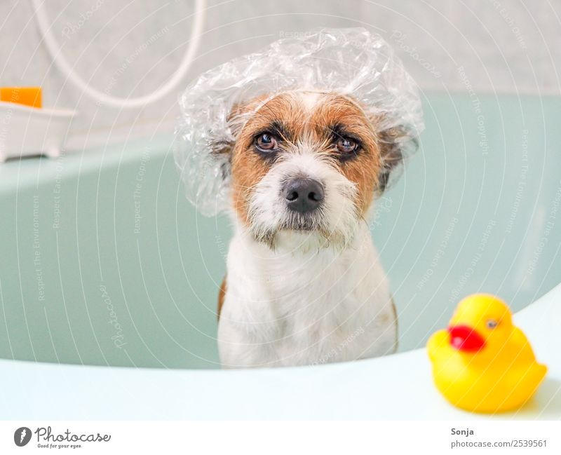 Dog Relaxation Animal Joy Yellow Funny Swimming & Bathing Brown Sit To enjoy Bathtub Cool (slang) Clean Wellness Bathroom Plastic