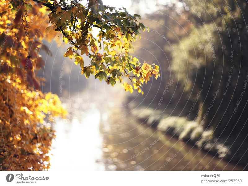 Nature Water Tree Plant Leaf Forest Autumn Environment Landscape Park Weather Contentment Gold Esthetic River Idyll