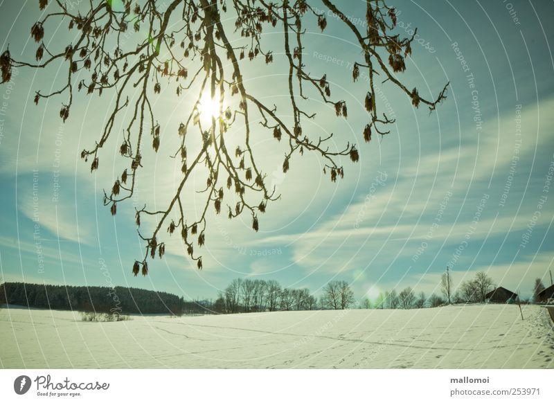 winter Environment Nature Landscape Sky Clouds Sun Sunlight Winter Climate Climate change Weather Beautiful weather Tree Field Footprint Cold Blue White