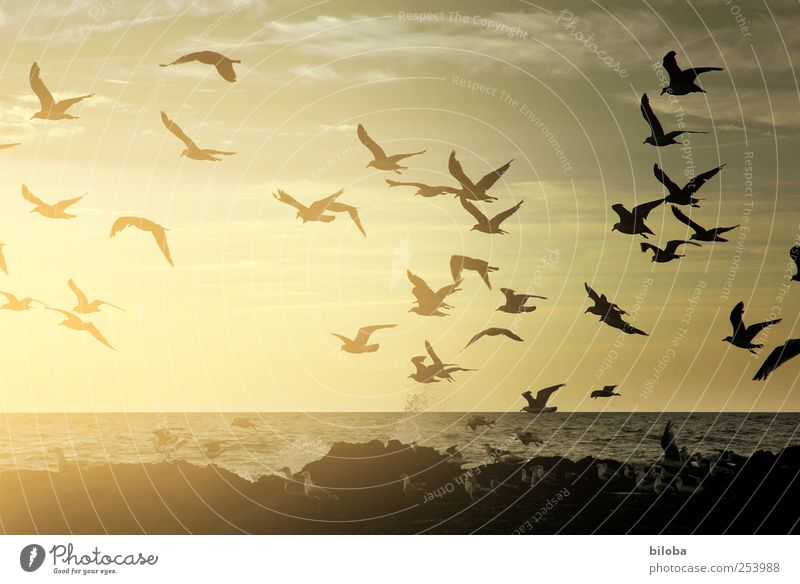 Sky Nature Water Beach Animal Black Yellow Freedom Landscape Coast Gold Flying Wing Romance Elements Travel photography