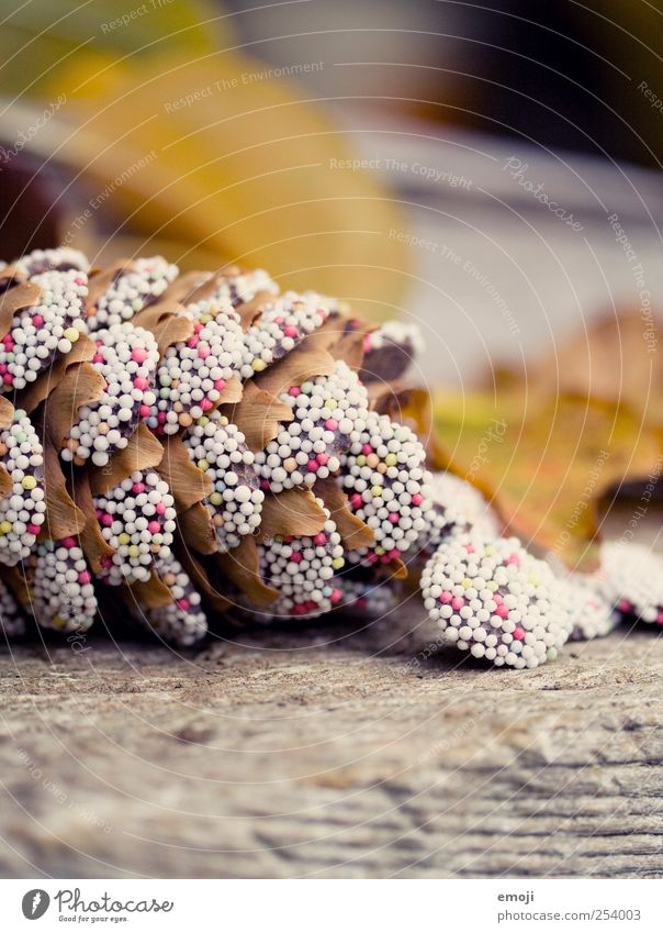 Fir cone, sugared Nature Plant Autumn Exotic Sweet Multicoloured Coulored sugar candy Sugar perl Handcrafts Cone Colour photo Exterior shot Close-up Detail