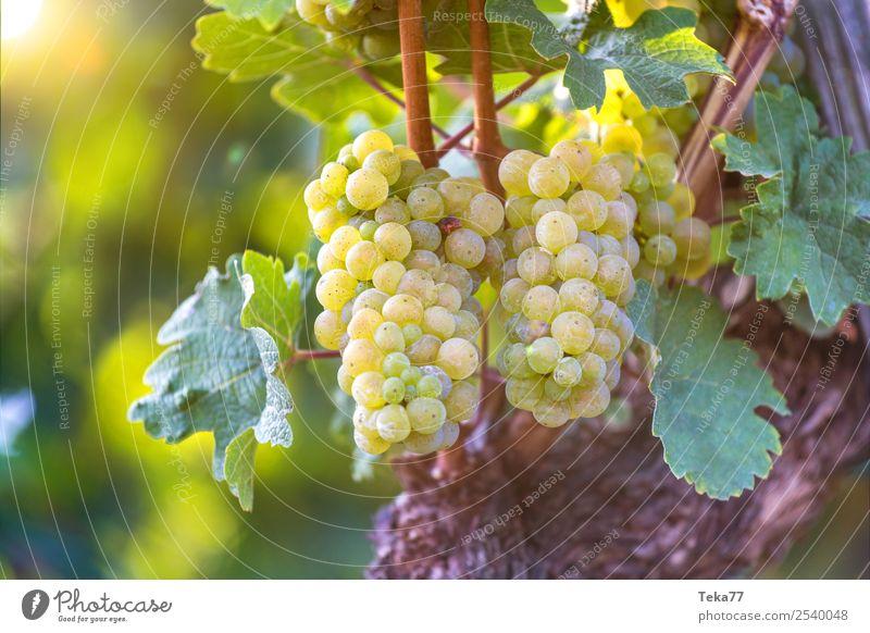 Grapes 5 Summer Environment Nature Plant Esthetic Bunch of grapes Wine Alcoholic drinks Vine Colour photo Exterior shot Deserted