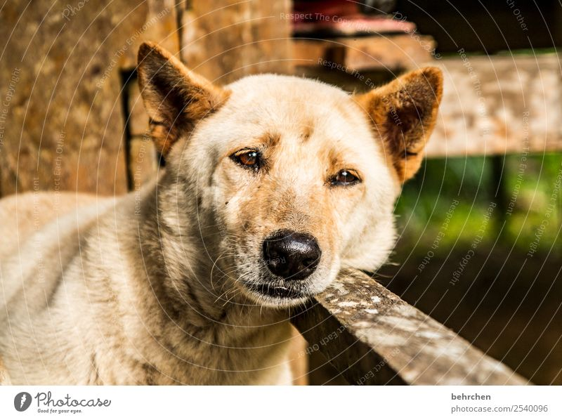 tired of Monday Vacation & Travel Tourism Trip Adventure Far-off places Freedom Pet Dog Animal face Pelt 1 Relaxation Sleep Cuddly Cute Asia Malaya Borneo Iban