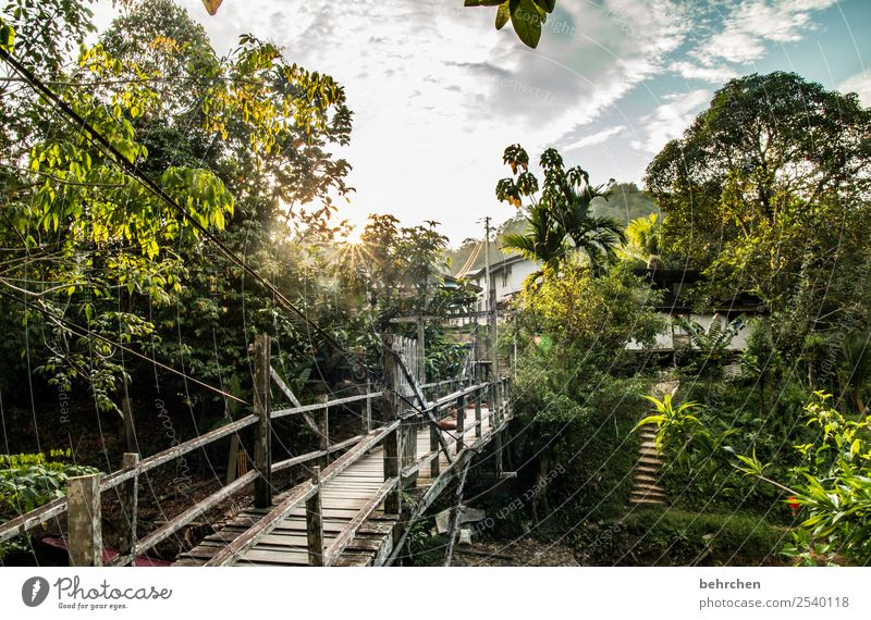 Home Vacation & Travel Tourism Trip Adventure Far-off places Freedom Nature Landscape Tree Virgin forest River Exceptional Exotic Fantastic Asia Malaya Borneo