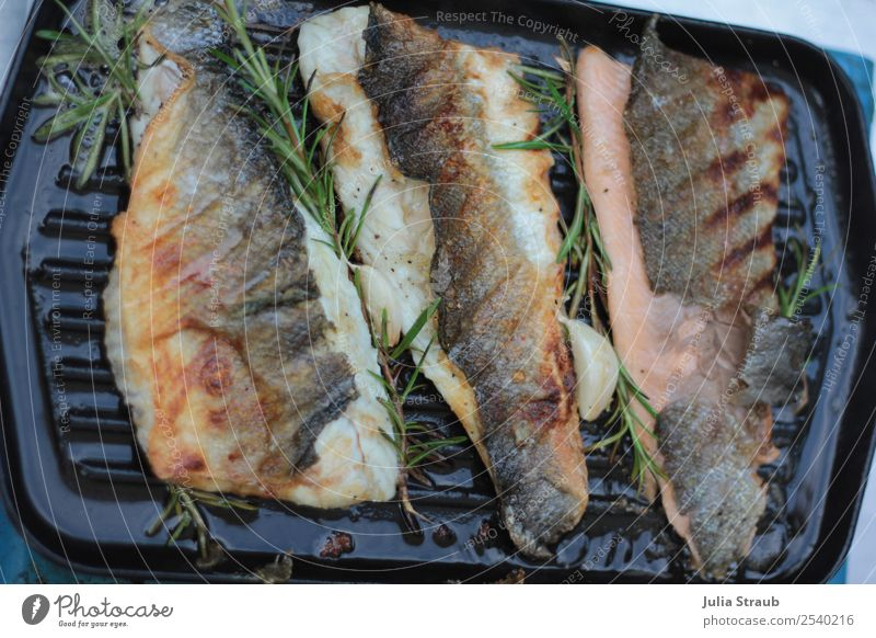 Fish Pan Rosemary Herbs and spices salmon trout Lunch Dinner Roasted BBQ Aromatic Eating Delicious Colour photo Exterior shot Day Bird's-eye view