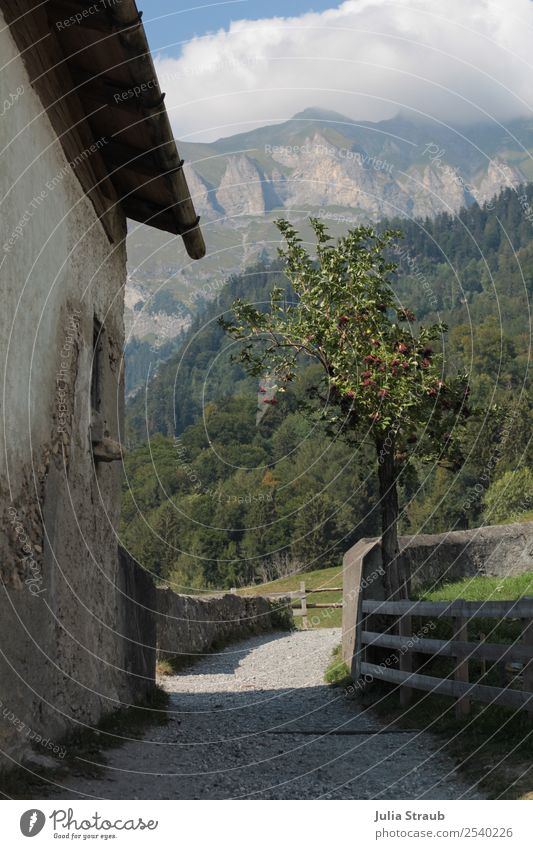 Switzerland way mountains tree Nature Landscape Clouds Sun Summer Tree Grass Apple tree Garden Mountain Peak House (Residential Structure) Wall (barrier)