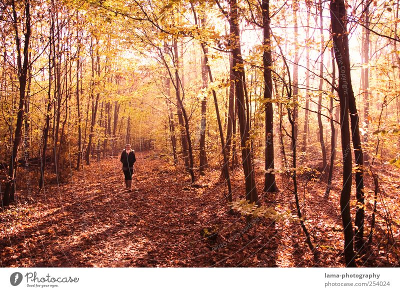 Human being Tree Red Forest Autumn Walking To go for a walk Autumn leaves Autumnal Autumnal colours Clearing Plant Automn wood Autumnal landscape Mood lighting