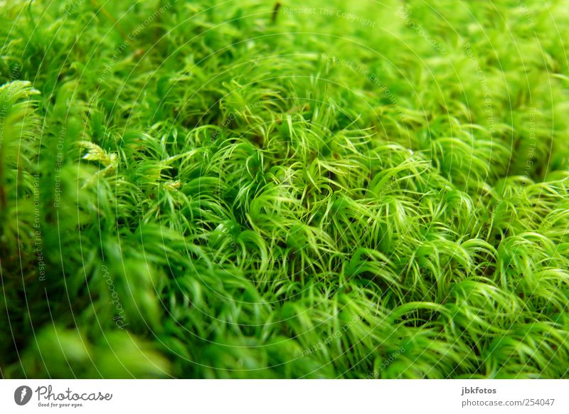 green hype Environment Nature Plant Foliage plant Wild plant Garden Advancement Carpet of moss Politics and state Macro (Extreme close-up) Unicoloured