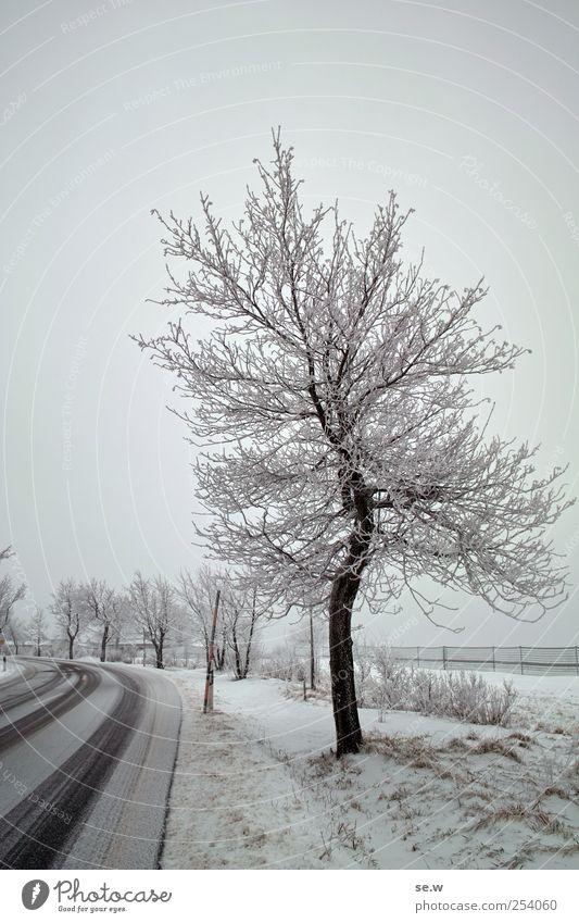 Sky Tree Winter Street Cold Snow Field Fog Driving Virgin snow