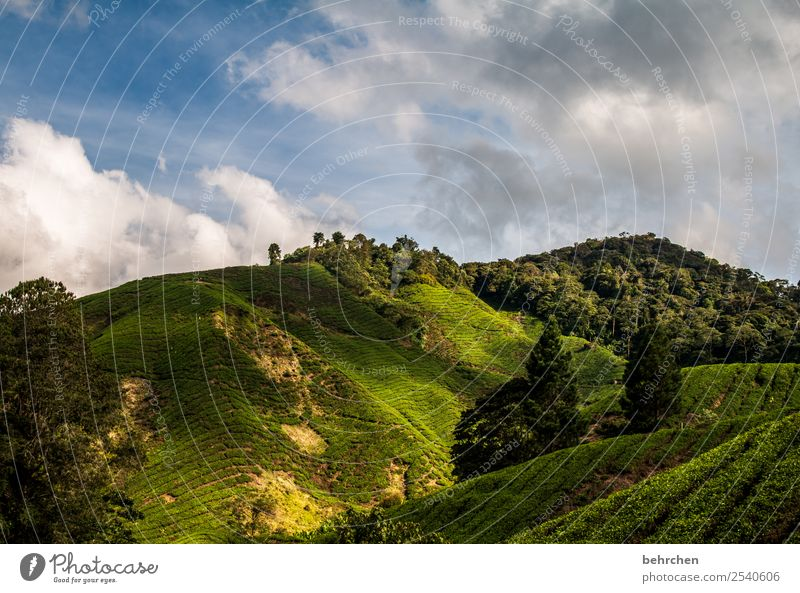 Light and shadow Vacation & Travel Tourism Trip Adventure Far-off places Freedom Environment Nature Landscape Sky Clouds Tree Bushes Agricultural crop