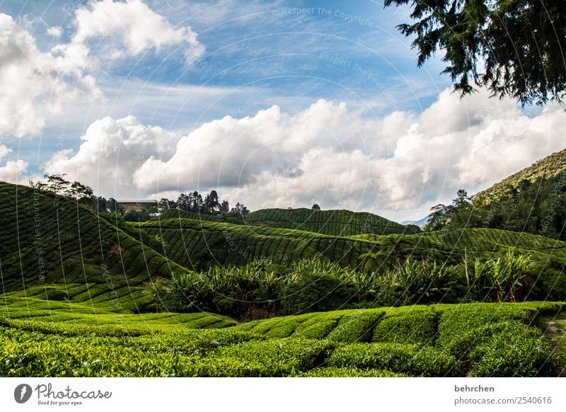 a little tea for the cold Vacation & Travel Tourism Trip Adventure Far-off places Freedom Nature Landscape Sky Clouds Plant Tree Leaf Agricultural crop
