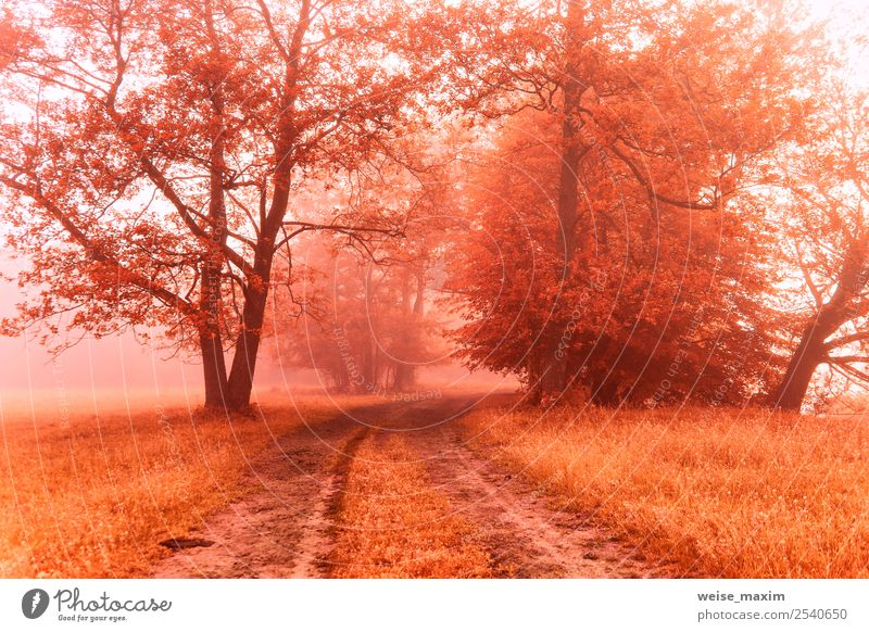 Autumn foggy dirt road. Colorful misty fall rural morning Beautiful Environment Nature Landscape Earth Sunrise Sunset Beautiful weather Fog Tree Grass Bushes