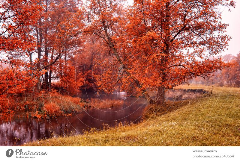 Autumn colorful sunrise on the foggy calm river Beautiful Nature Landscape Elements Sand Water Sky Sunrise Sunset Beautiful weather Fog Tree Grass Leaf Park