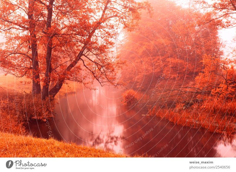 Fall colors on autumn foggy river. Alden trees Beautiful Nature Landscape Plant Elements Sand Air Water Drops of water Sunrise Sunset Autumn Beautiful weather