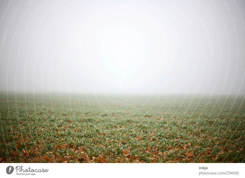 You don't feel the silence until you're right in the middle. Earth Air Sky Horizon Autumn Bad weather Fog Grass Meadow Field Dark Far-off places Infinity Creepy