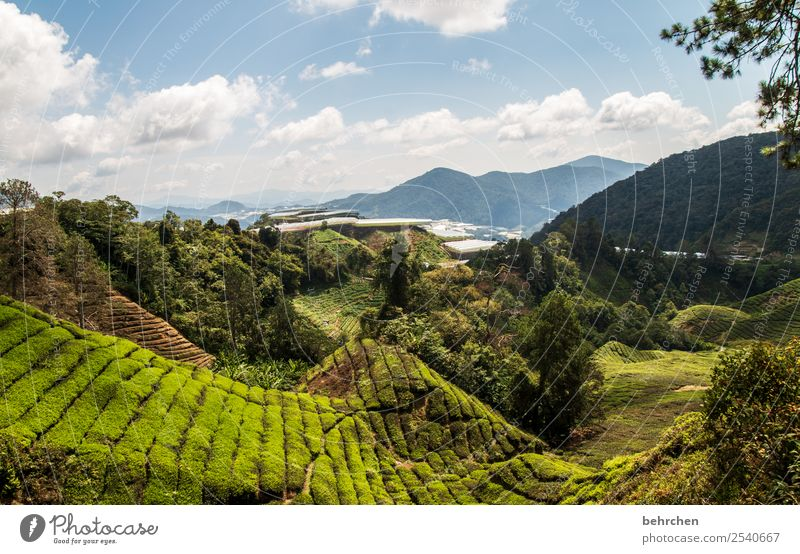 tea for the weekend Vacation & Travel Tourism Trip Adventure Far-off places Freedom Environment Nature Landscape Sky Clouds Plant Tree Leaf Agricultural crop
