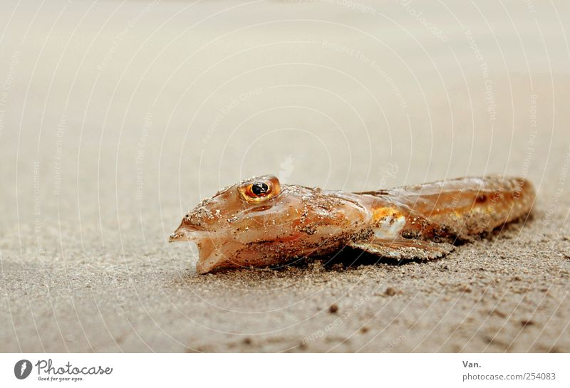 Nature Red Beach Animal Eyes Yellow Sand Lie Fish Wild animal Dry Muzzle Fin Dead animal