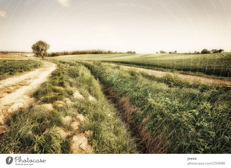 separation Agriculture Forestry Nature Landscape Earth Sky Clouds Summer Beautiful weather Tree Agricultural crop Field Lanes & trails Large Brown Green Calm