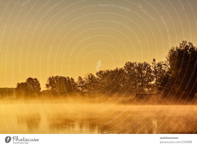 Lake in the morning Nature Landscape Tree Lakeside Hut Relaxation Calm Idyll Haze Misty atmosphere Water Damp Colour photo Exterior shot Morning Dawn