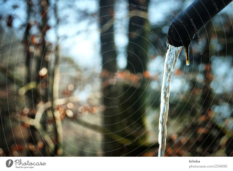 Being in flow Nature Landscape Plant Water Summer Autumn Winter Forest Drop Clean Blue Brown White Transparent Drinking water Movement Subdued colour