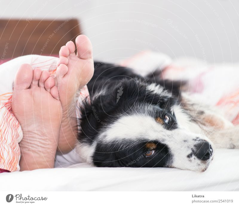 Dog in bed Well-being Calm Living or residing Flat (apartment) Bed Bedroom Human being Masculine Man Adults Feet 1 Pet Animal Relaxation To enjoy Lie Sleep