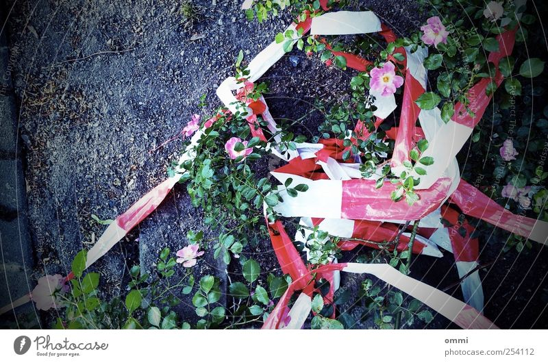 White Green Plant Red Flower Leaf Colour Blossom Earth Dirty Pink Wild Dangerous Authentic Simple Decline