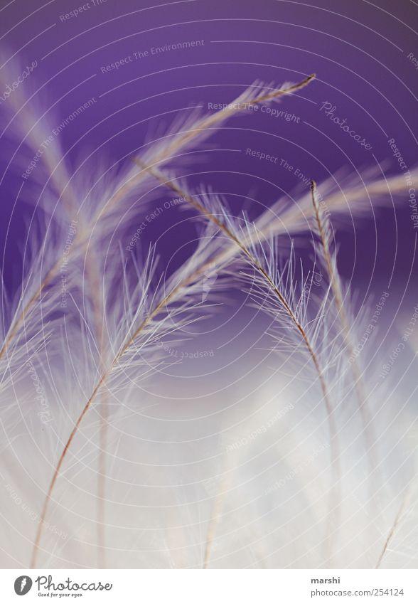White Plant Soft Violet Metal coil Feeler