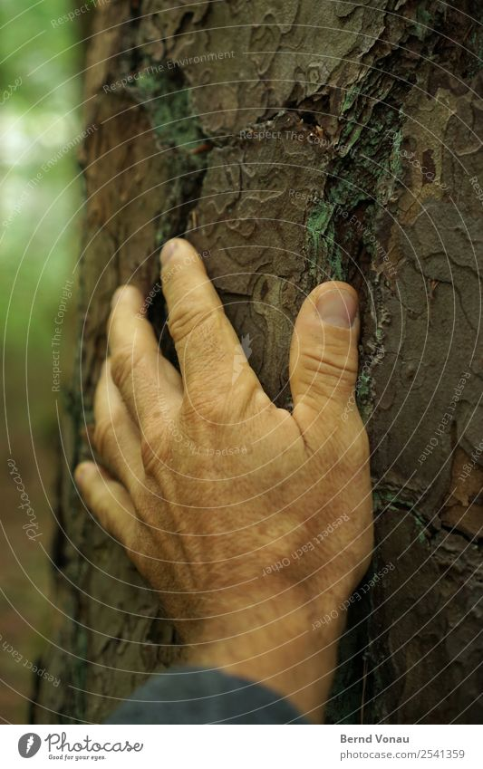 arrive Human being Masculine Male senior Man Hand Fingers 1 45 - 60 years Adults Environment Nature Plant Tree Forest Touch Come Retentive Tree bark