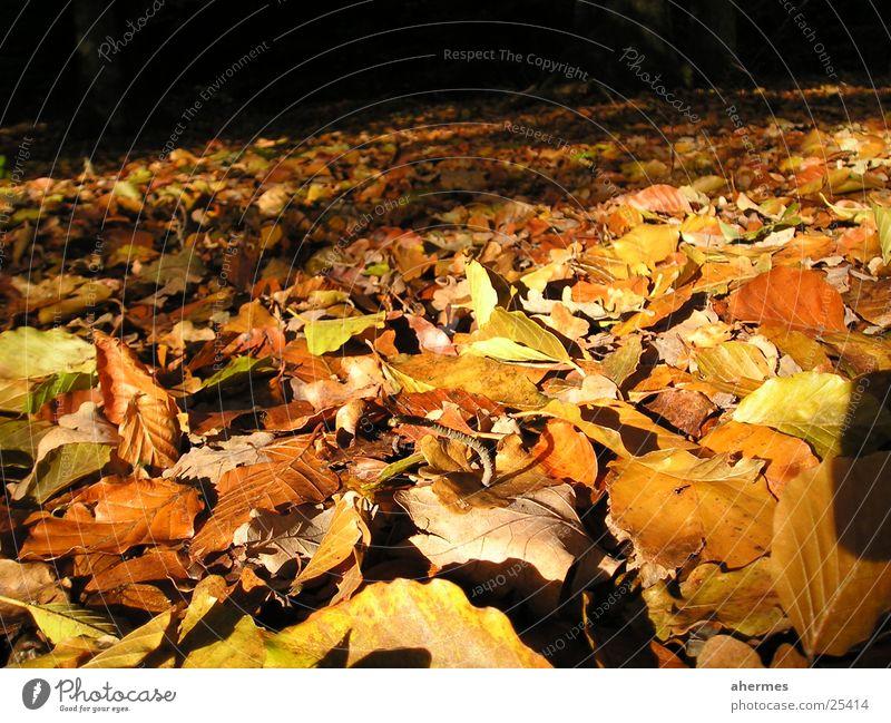 autumn Autumn Leaf Macro (Extreme close-up) Nature foliage