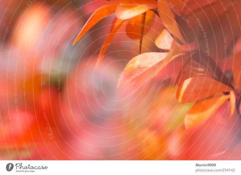 Nature Red Autumn Moody Happiness Crazy Romance Warm-heartedness Joie de vivre (Vitality) Ease