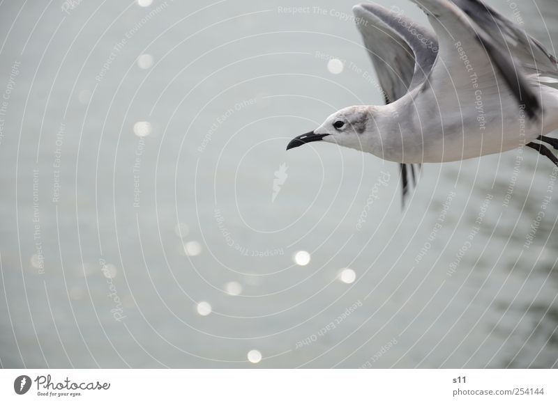 Blue White Beautiful Animal Black Calm Emotions Movement Bird Glittering Flying Free Esthetic Exceptional Wing Point