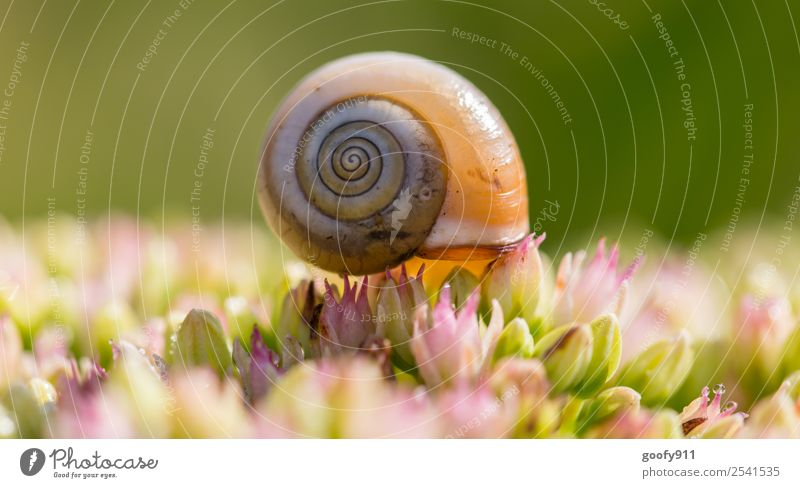 Beautiful cottage Trip Environment Nature Spring Summer Beautiful weather Plant Flower Blossom Garden Park Meadow Animal Wild animal Snail Snail shell 1 Observe