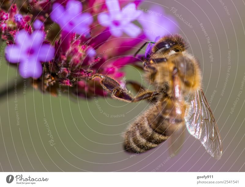adherence Trip Environment Nature Spring Summer Beautiful weather Plant Flower Blossom Garden Park Meadow Animal Farm animal Wild animal Bee Animal face Wing