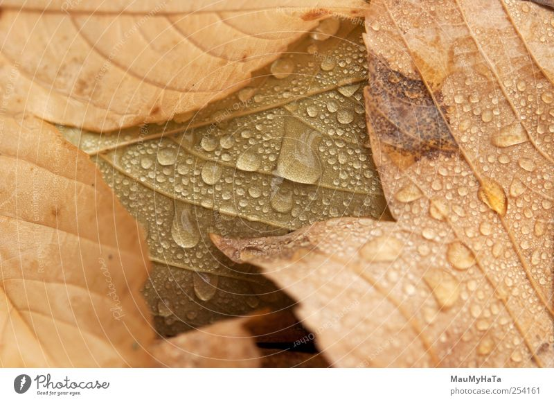 Drops of leaves Nature Water Beautiful Tree Plant Leaf Clouds Relaxation Autumn Freedom Garden Park Rain Climate Elegant Adventure