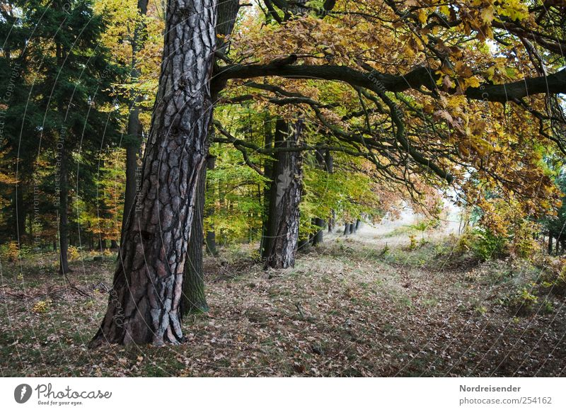 Nature Plant Calm Forest Relaxation Autumn Landscape Lanes & trails Moody Hiking Change Serene Footpath Tree trunk Meditation Autumn leaves