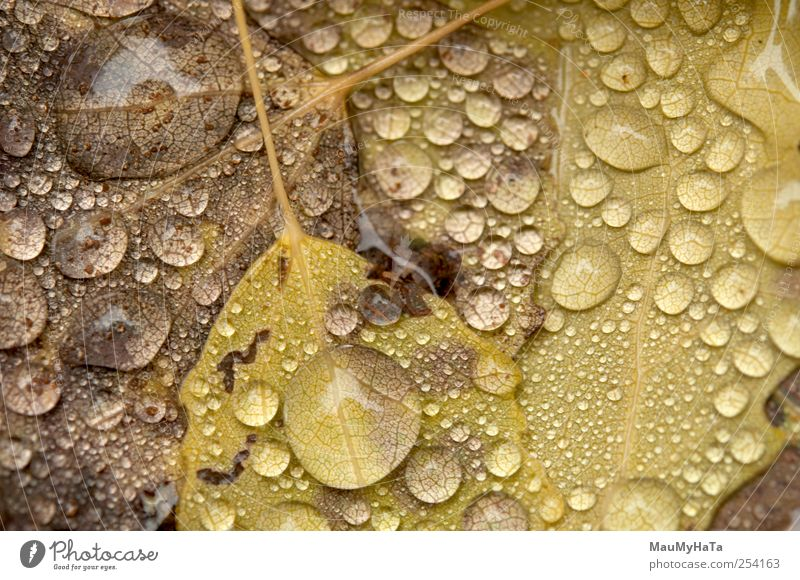 Water drops Nature Plant Elements Drops of water Autumn Climate Bad weather Rain Tree Leaf Wild plant Garden Park Contact Art Might Power Style Change
