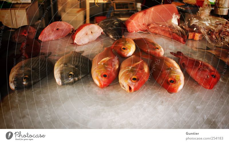 the dying of the seas Wild animal Dead animal Fish Cold Brown Red Black White Sell Fish market Asia Death Food Ice Sliced Versatile Selection Eyes Muzzle