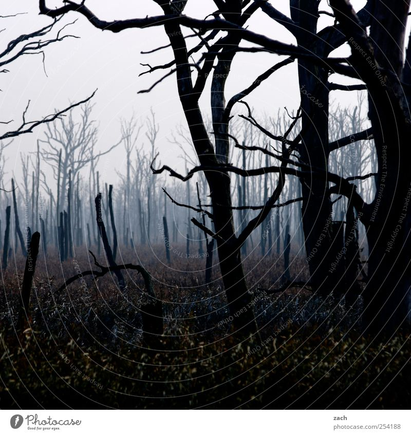 Nature Blue Tree Plant Black Dark Autumn Landscape Wood Brown Wet Fog Transience End Creepy Tree trunk