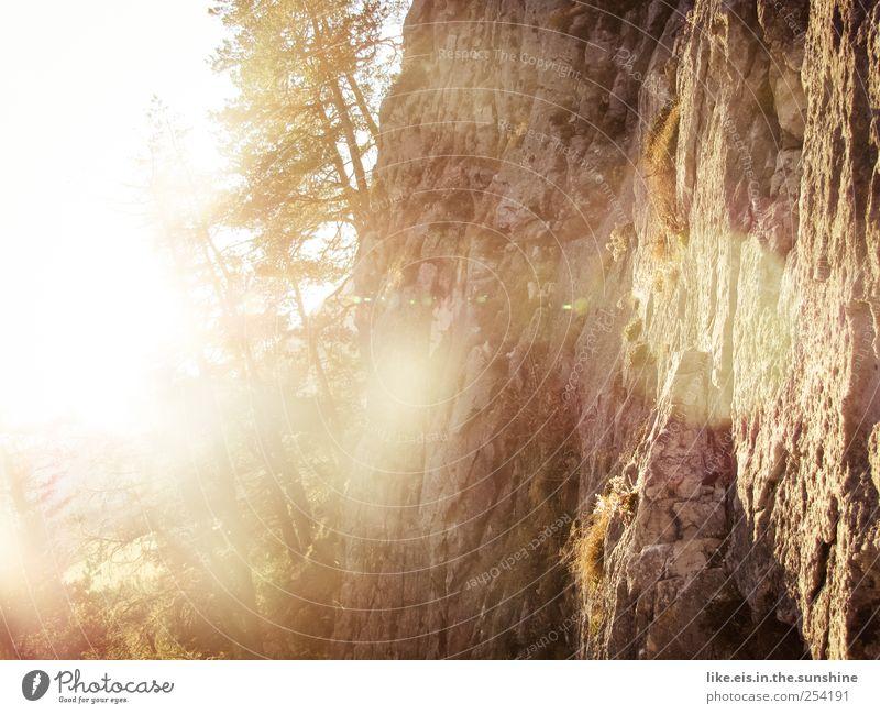 Nature Tree Calm Autumn Landscape Mountain Grass Glittering Gold Rock Hiking Natural Bushes Illuminate Alps Beautiful weather