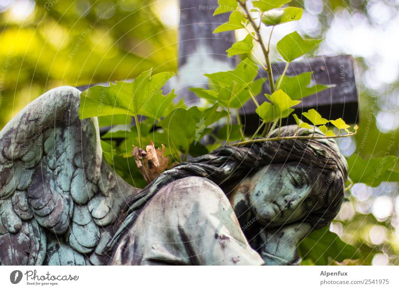 Stony angel. Stone Angel Power Willpower Trust Protection Safety (feeling of) Friendship Together Love Hope Belief Humble Dream Sadness Concern Grief