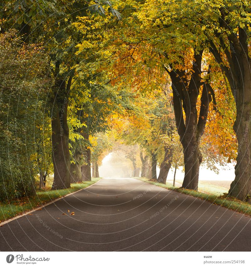 autumnal Environment Nature Landscape Plant Autumn Climate Weather Fog Tree Transport Traffic infrastructure Street Lanes & trails Country road Authentic