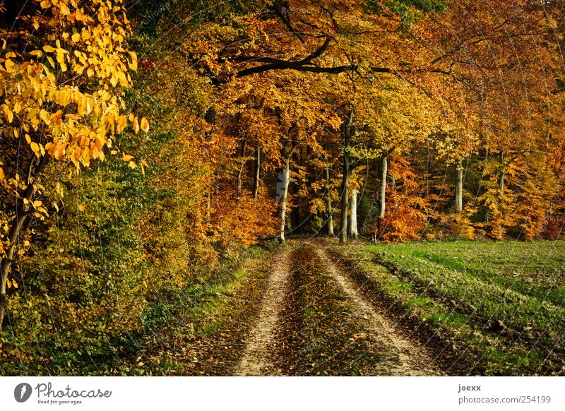 let go of sb./sth. Nature Landscape Autumn Beautiful weather Tree Field Forest Lanes & trails Brown Yellow Green Black Transience Change Footpath Automn wood