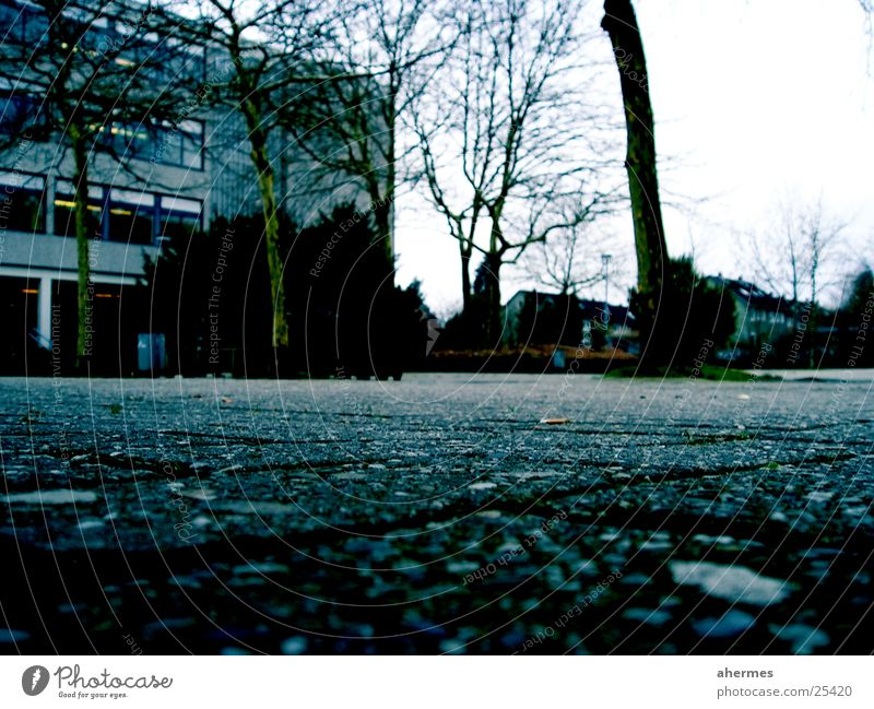 Tree Architecture School building Gloomy Force Boredom Cobblestones Harrowing Schoolyard Demanding Oldenburg